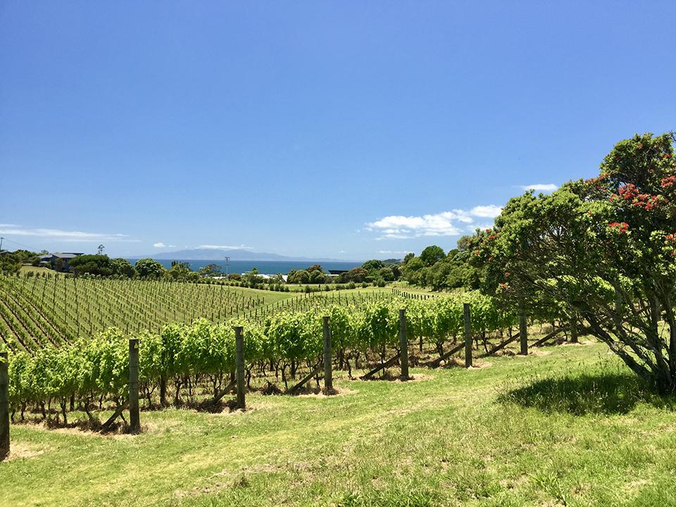 ニュージーランドワインは白だけに非ず